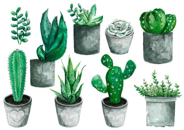 Satz handgemalte aquarellelemente der hohen qualität für ihr design mit sukkulenten, kaktus. Premium Fotos