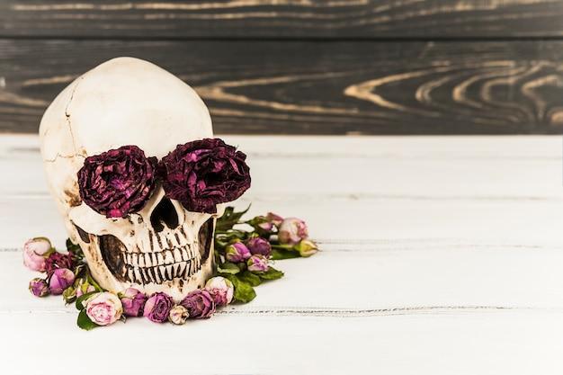 Schädel mit rosen in augenhöhlen Kostenlose Fotos