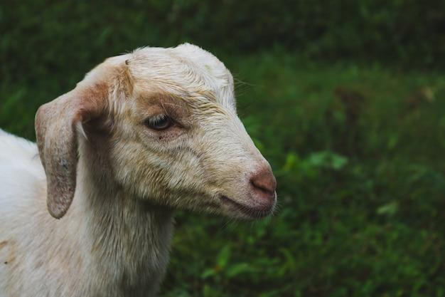 Schaf Kostenlose Fotos