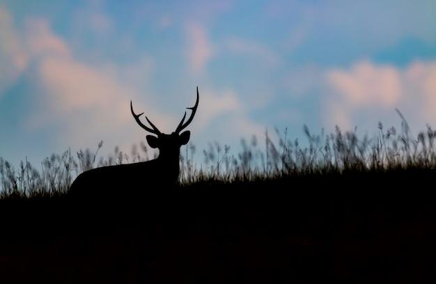 Schattenbild der bellenden rotwild unter dem gras Premium Fotos