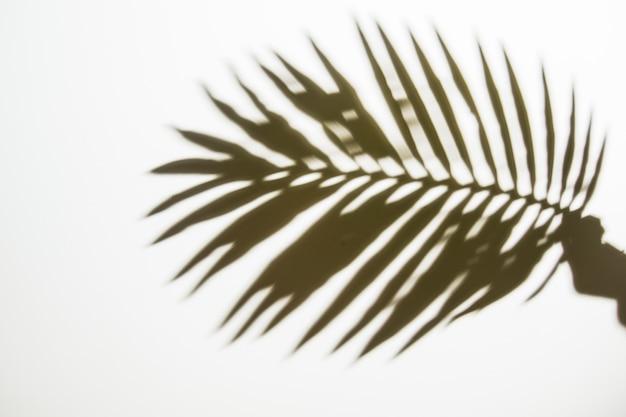 Schattenbild der hand einer person, die palmblatt auf weißem hintergrund hält Kostenlose Fotos