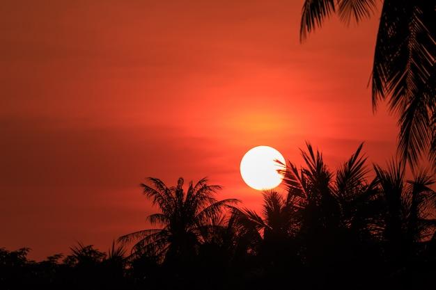 Schattenbild der kokosnusspalme im sonnenuntergang. konzept für die sommersaison Premium Fotos