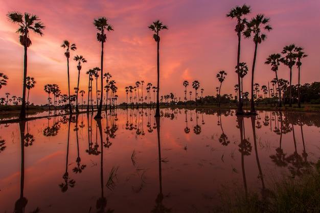 Schattenbild der reflexion der palme während der sonnenaufgangzeit Premium Fotos