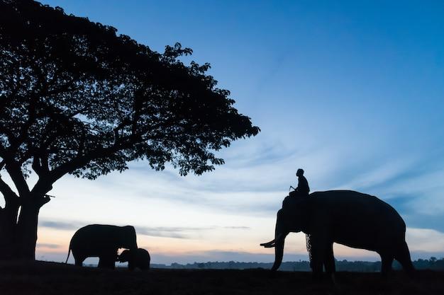 Schattenbild des elefanten Premium Fotos