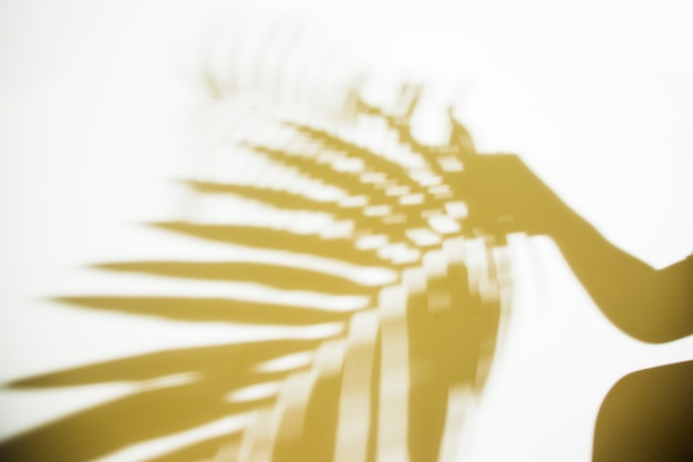 Schattenbild einer person, die unscharfes palmblatt auf weißem hintergrund hält Kostenlose Fotos