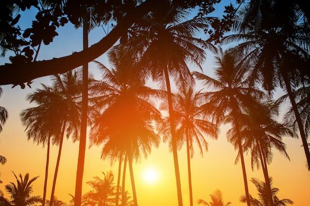 Schattenbilder von palmen gegen den himmel während eines tropischen sonnenuntergangs Premium Fotos