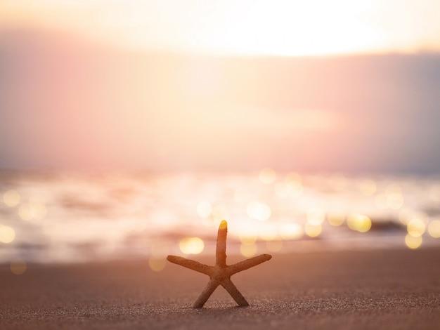 Schattenbildstarfish auf sand am sonnenuntergangstrand Premium Fotos
