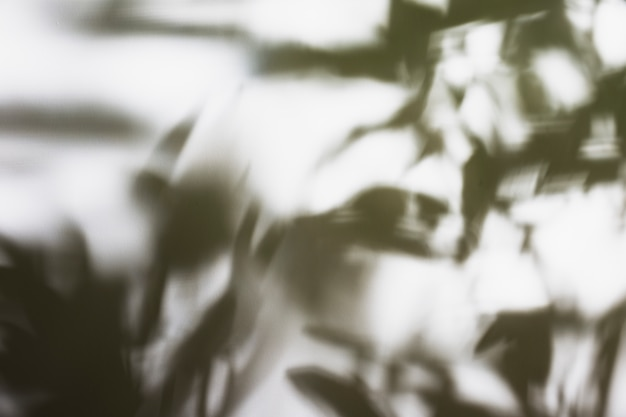 Schattenhintergrund von natürlichen palmblättern Kostenlose Fotos