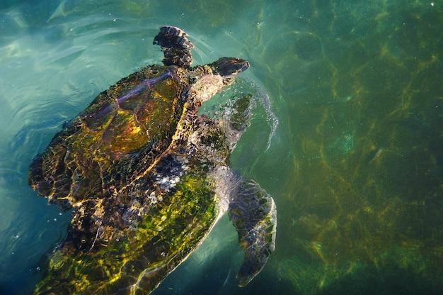 Schildkröten im wasser am roten meer Premium Fotos