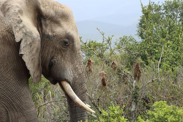 Schlammiger elefant, der bei tageslicht durch einen dschungel geht, der mit grün bedeckt ist Kostenlose Fotos