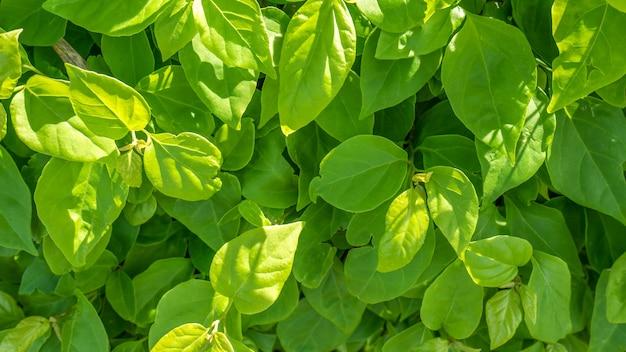 Schließen sie grüne blätter am sonnigen tag Premium Fotos