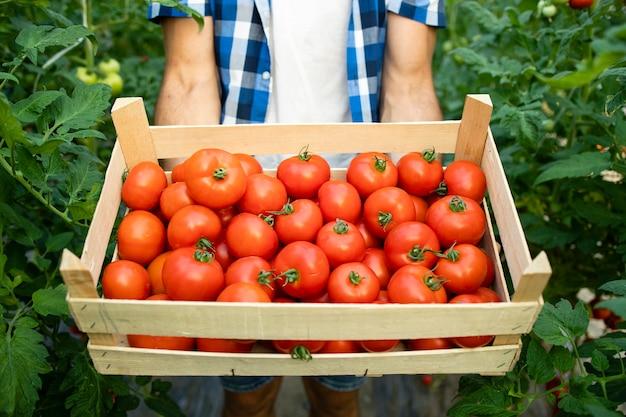 Schließen sie herauf ansicht der hölzernen kiste voll des roten leckeren tomatengemüses Kostenlose Fotos