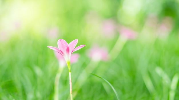 Schließen sie herauf bild des einzelnen rosa blumen- und grünunschärfehintergrundes Premium Fotos