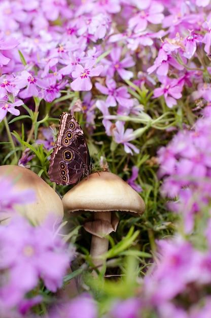 Schließen sie herauf foto des schmetterlinges auf pilz unter schönen flammenblumeblumen Premium Fotos