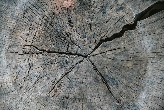 Schließen sie herauf geschnittenen baumstamm mit altem sprung im akha-dorf von maejantai auf dem hügel in chiang mai Premium Fotos