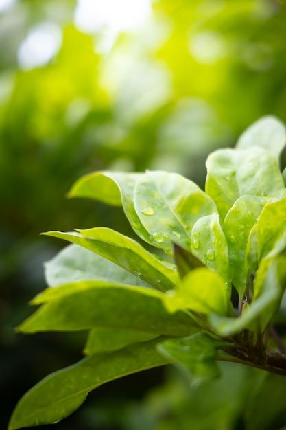 Schließen sie herauf grünes blatt unter sonnenlicht im garten. Premium Fotos