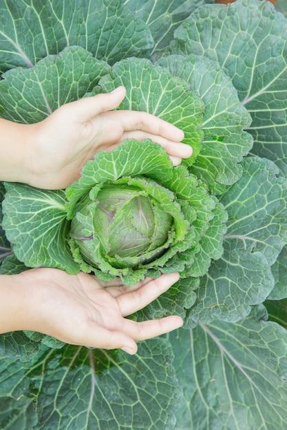 Schließen sie herauf handlandwirt im garten während des morgenzeit-lebensmittelhintergrundes Kostenlose Fotos