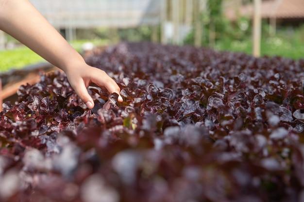 Schließen sie herauf handlandwirt im wasserkulturgarten während des morgenzeit-lebensmittelhintergrundes Kostenlose Fotos