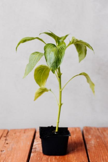 Schließen sie herauf jungpflanze auf dem tisch Kostenlose Fotos