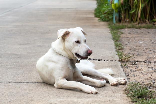 Schließen sie herauf porträt eines streunenden hundes auf seitenweg Premium Fotos