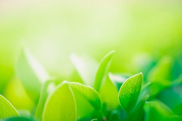 Schließen sie herauf schöne ansicht von naturgrünblättern auf unscharfem grünbaumhintergrund Premium Fotos