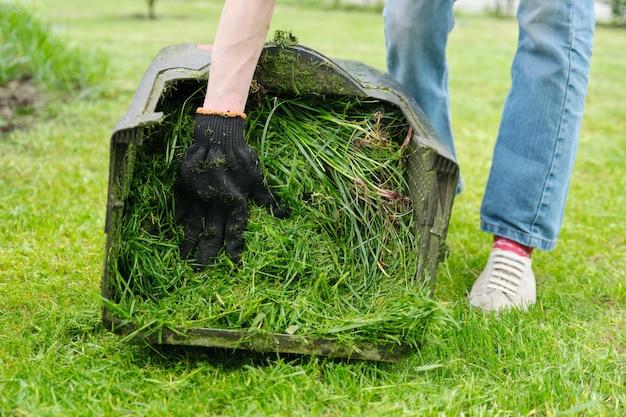 Schließen sie oben vom frisch gemähten gras in einem rasenmäher. Premium Fotos