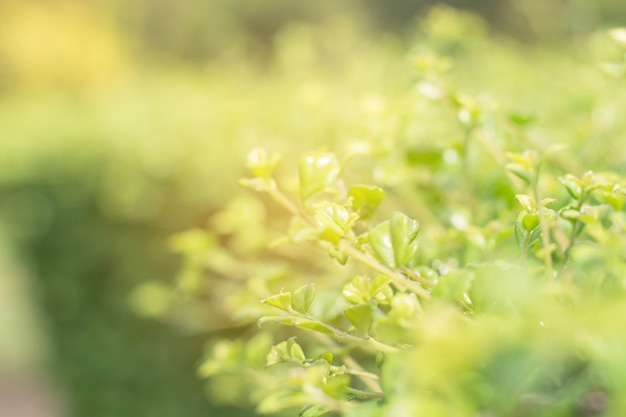 Schließen sie oben vom grünen blatt auf unscharfem hintergrund im garten Premium Fotos