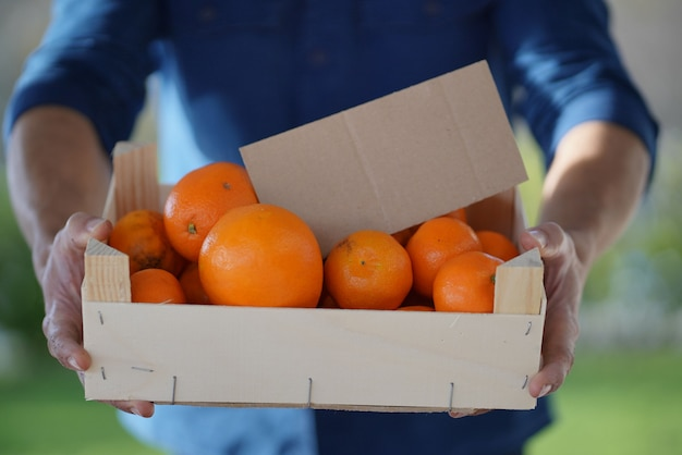 Schließen sie oben vom lokalen landwirt, der organische orangen und klementinen in der kiste mit organischem zeichen hält Premium Fotos
