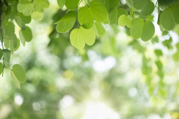Schließen sie oben vom naturgrünblatt auf unscharfem grün unter sonnenlicht. Premium Fotos
