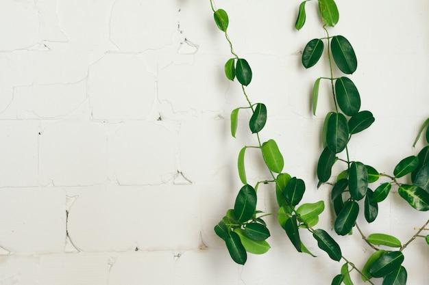 Schließen sie oben von der grünen zimmerpflanze auf weißer wand, innendekoration Premium Fotos