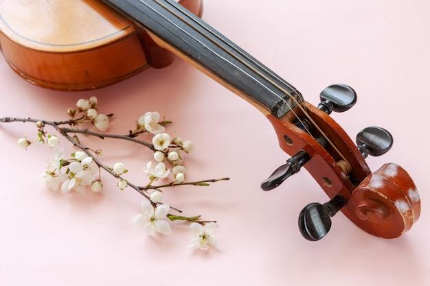 Schließen sie oben von der niederlassung der blühenden kirsche und der violine auf pastellsüßigkeitsrosahintergrund Premium Fotos
