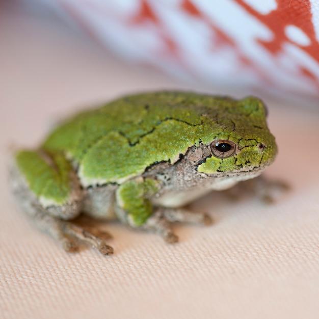 Schließen sie oben von einem grünen frosch am see des holzes, ontario Premium Fotos