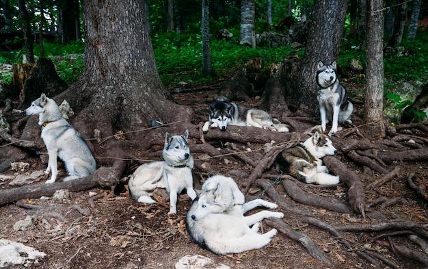 Schlittenhunde bleiben unter einem baum stehen. Premium Fotos