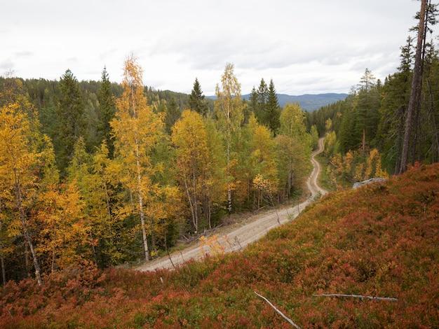 Schmale straße, umgeben von schönen herbstlichen bäumen in norwegen Kostenlose Fotos