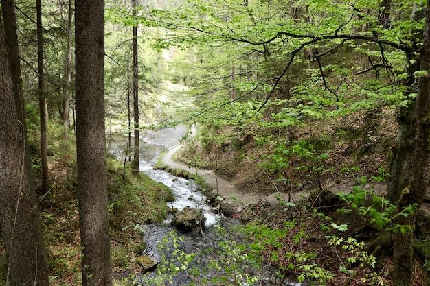 Schmaler fluss in einem wald, umgeben von schönen grünen bäumen Kostenlose Fotos