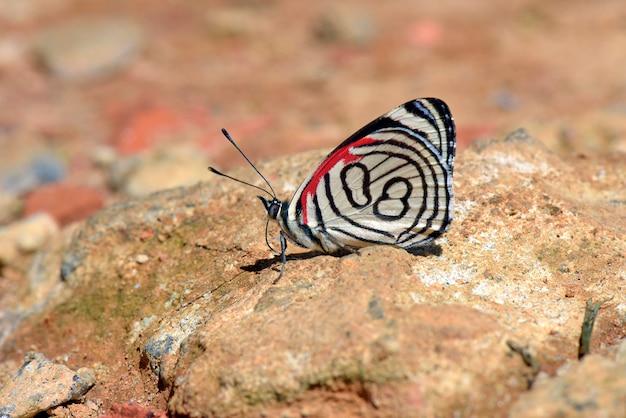 Schmetterling achtundachtzig frisst auf dem boden Premium Fotos