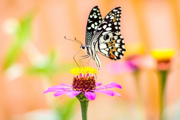 Schmetterling auf blume und unscharfem hintergrund Premium Fotos