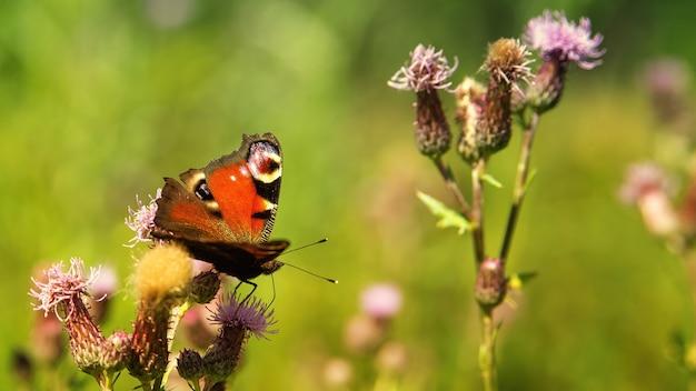Schmetterling auf blume Kostenlose Fotos