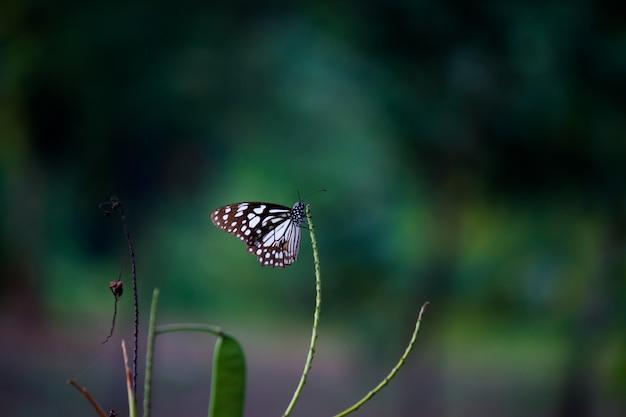 Schmetterling auf der blume pflanze Premium Fotos