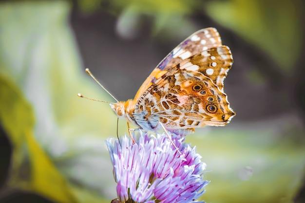 Schmetterling auf einer blume. selektiver fokus natur. Premium Fotos