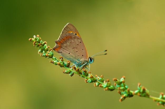 Schmetterling auf einer blume Premium Fotos
