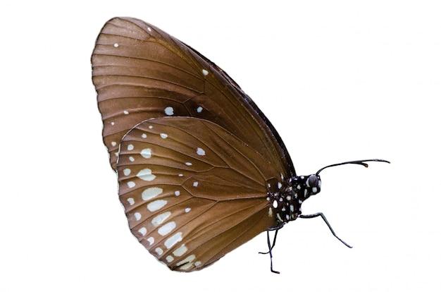 Schmetterling beschmutzt orange gelbes weißes hintergrund isolat Premium Fotos
