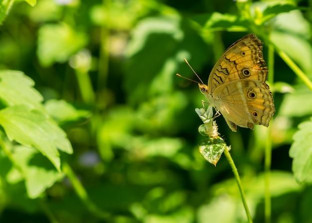 Schmetterling hockte eine blume auf grünem naturhintergrund Premium Fotos