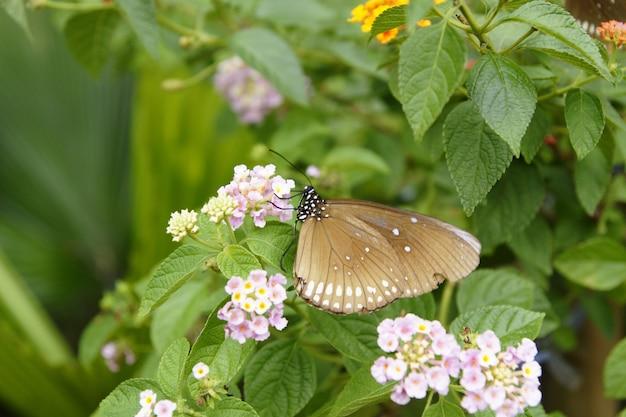 Schmetterlinge auf blumen in einem garten gehockt. Premium Fotos