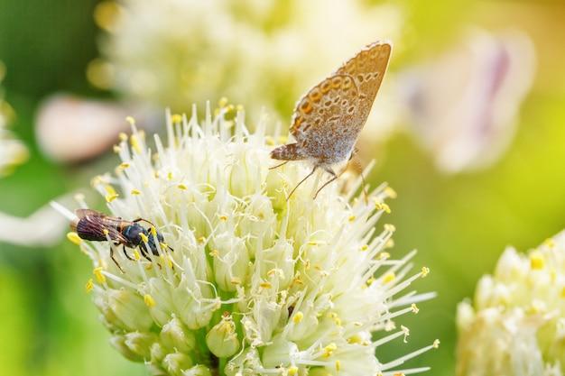 Schmetterlinge sitzen auf blumen auf einem grünen natürlichen hintergrund Premium Fotos
