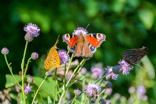 Schmetterlinge und andere insekten sitzen auf blumen Premium Fotos