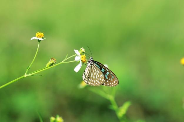 Schmetterlinge und blumen in einem schönen garten. Premium Fotos