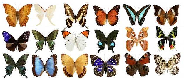 Schmetterlingssammlungsbuntes lokalisiert auf weiß Premium Fotos