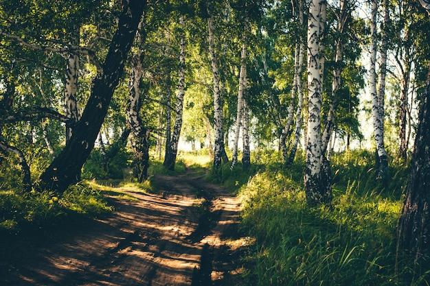 Schmutzige landstraße unter vielen bäumen. Premium Fotos