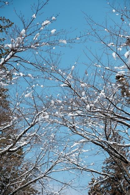 Schnee am zweig im wald von japan Kostenlose Fotos